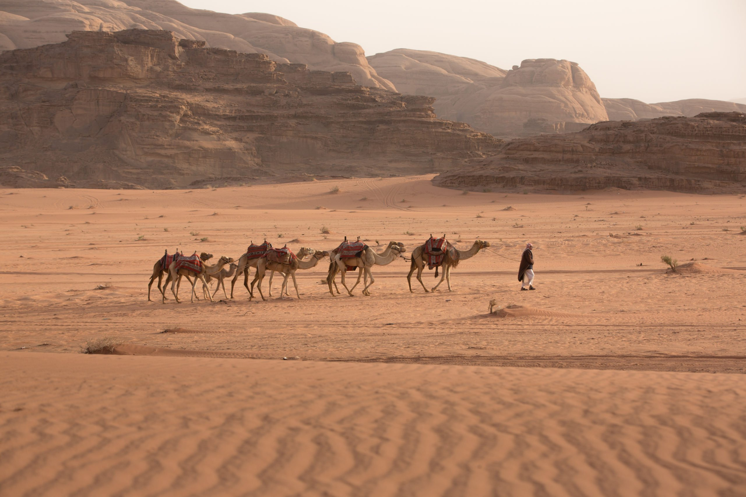 petra and wadi rum tour
