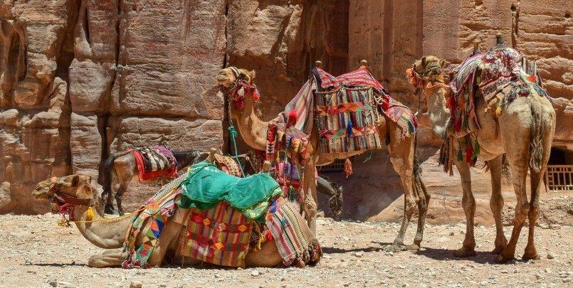 kosher trips to petra