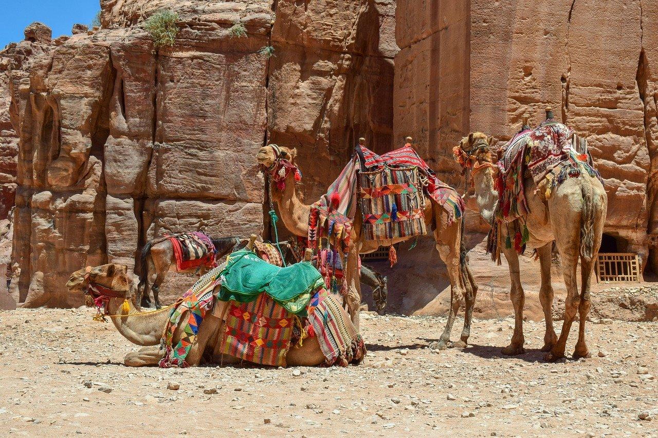 camels-4365260_1280