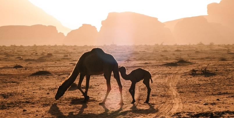 5 reasons to visit jordan