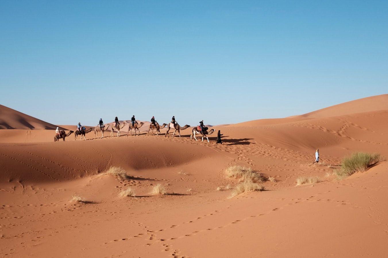 camels petra day tour