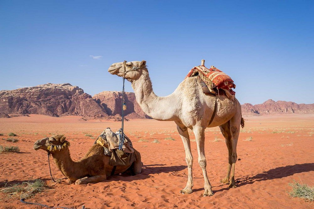 8 Day Ultimate Israel and Jordan Tour Package